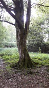 Beste Spielothek in Hildesheimer Wald finden